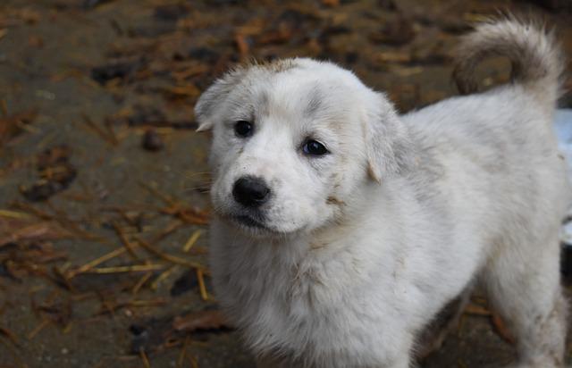 Добрый щенок