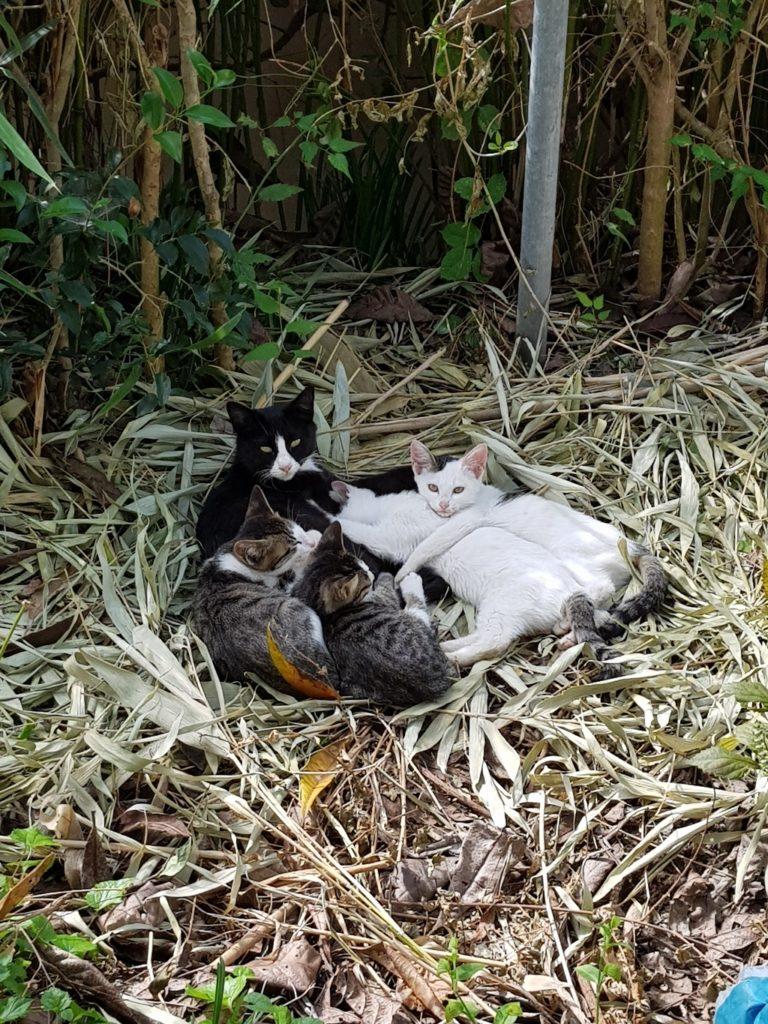Семья уличных котов