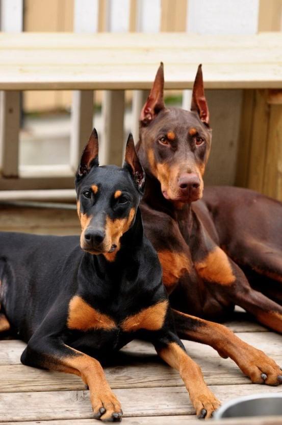 Чёрный и коричневый