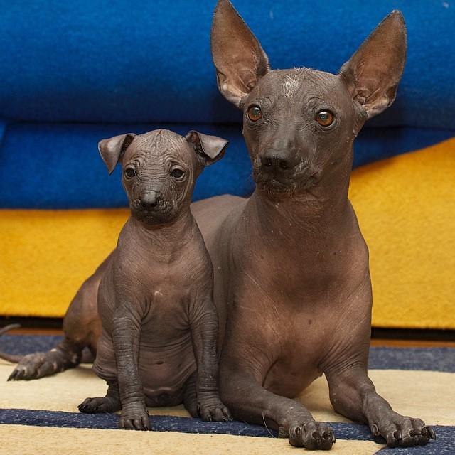 Сука и щенок