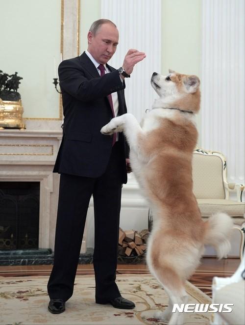 Собака Юмэ