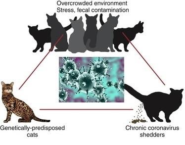 Механизм заражения животного