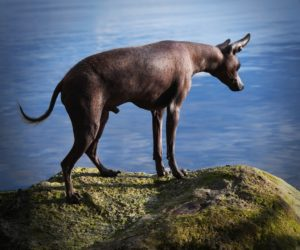 Пёс на море