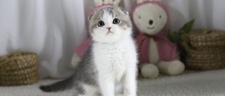 Котёнок с ушками
