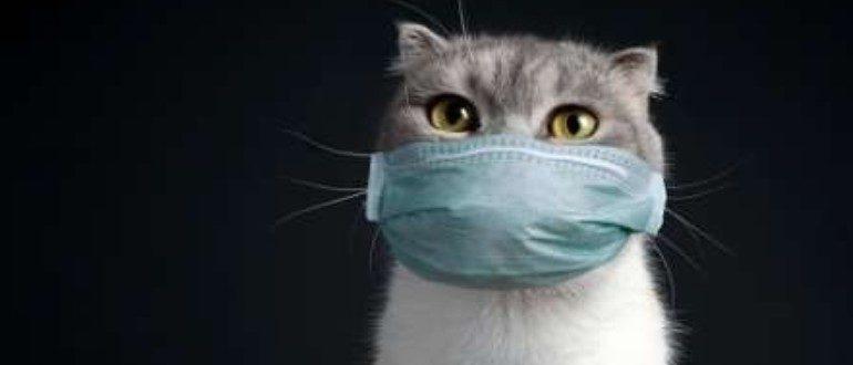 Котик в маске