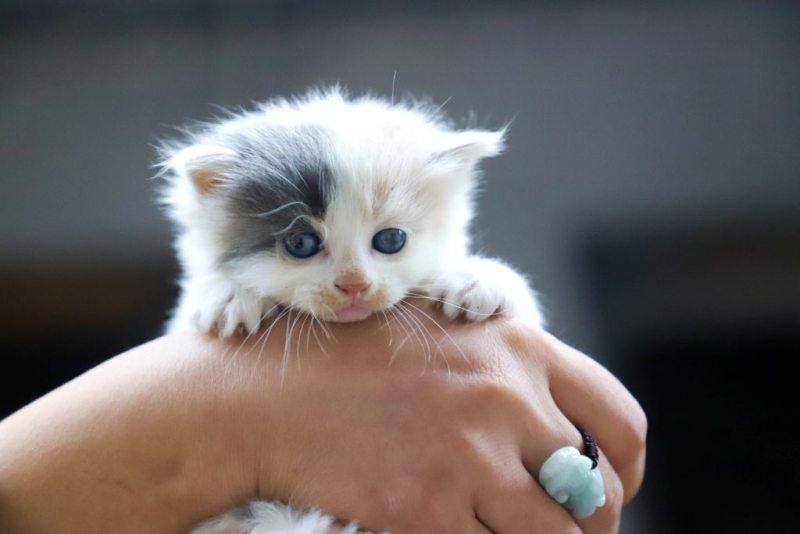 Котик на руках