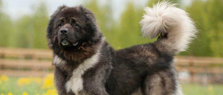 Красивый пёс