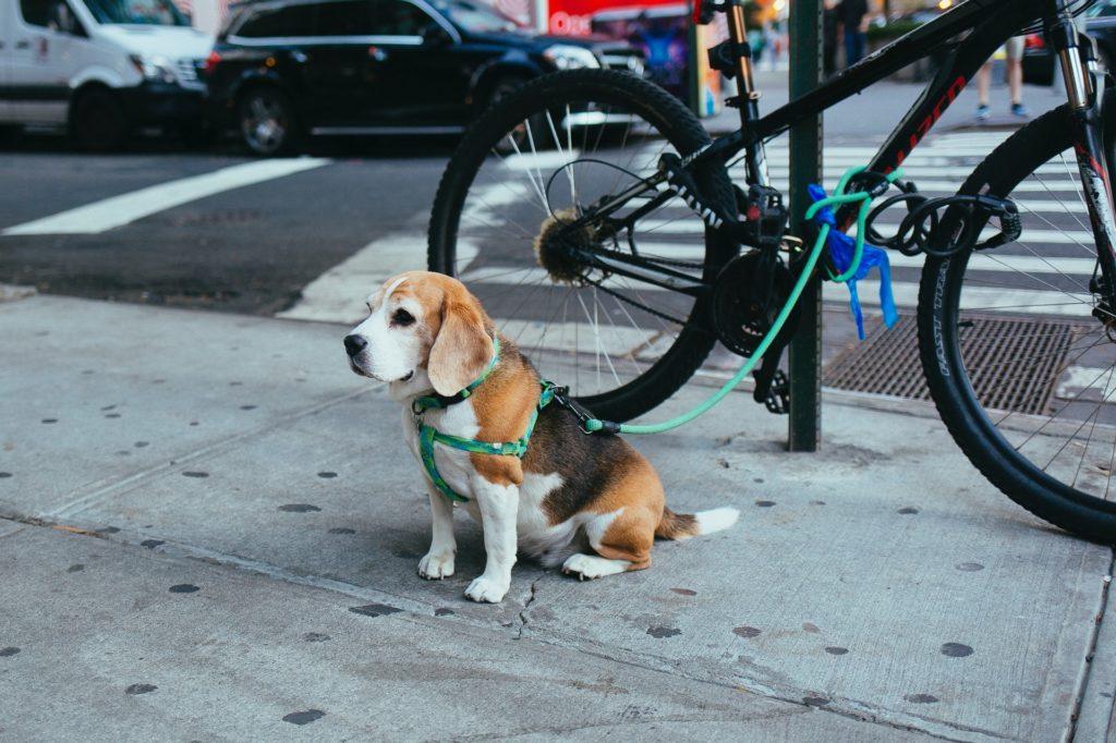 Пёс на поводке