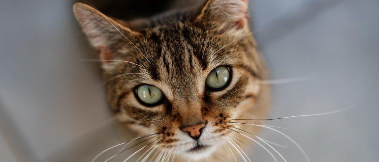 Красивый котик