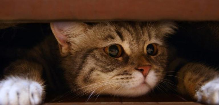 Котик под диваном