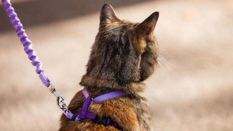 Послушный кот