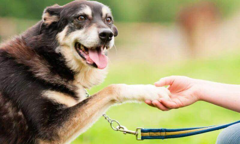 Обучение псов