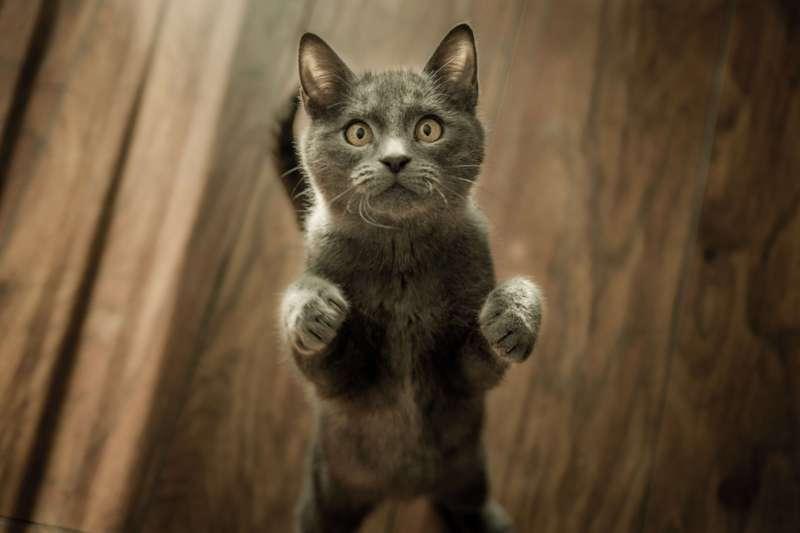 Котик нападает
