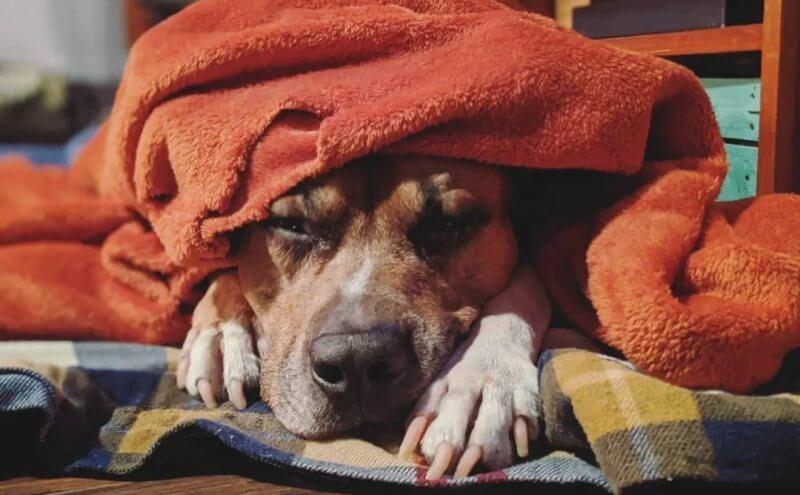 Пёс спит