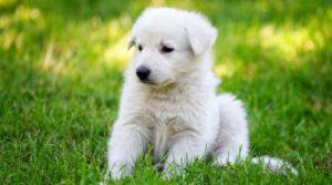 Маленький пёсик